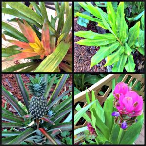4-pictures-of-tropical-foilage